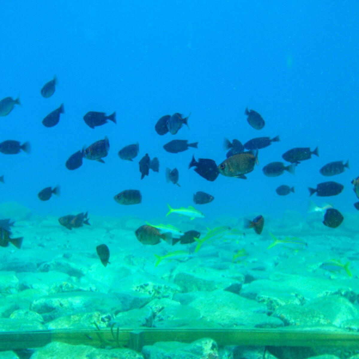 透き通る海! 三島村 竹島に海水浴に来ませんか?
