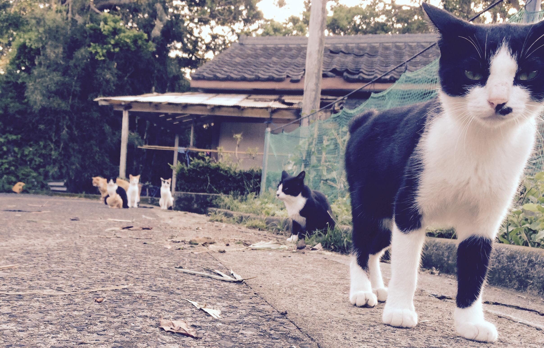 竹島はネコの島!?離島の悩み事。