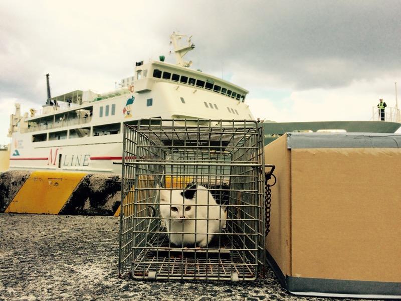 手術できなかった猫たちのその後。離島の猫問題。
