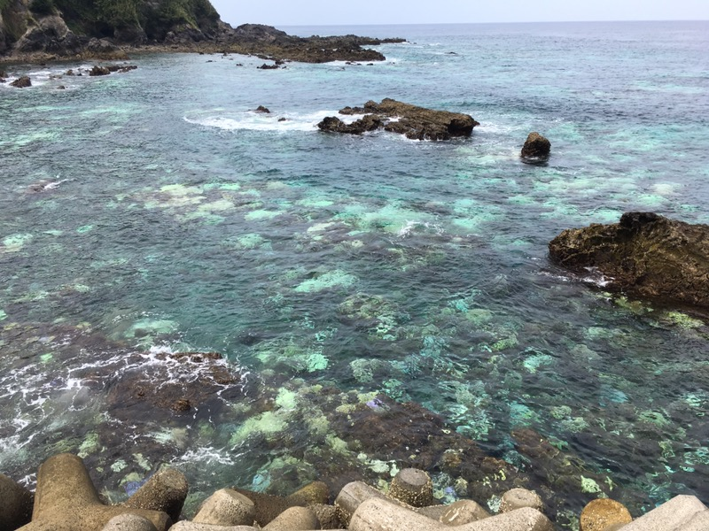 あれ!サンゴが白くなってる!!台風との関係とは!?