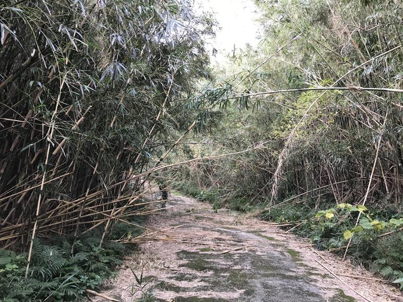 筍採りのための道路整備。離島の仕事。